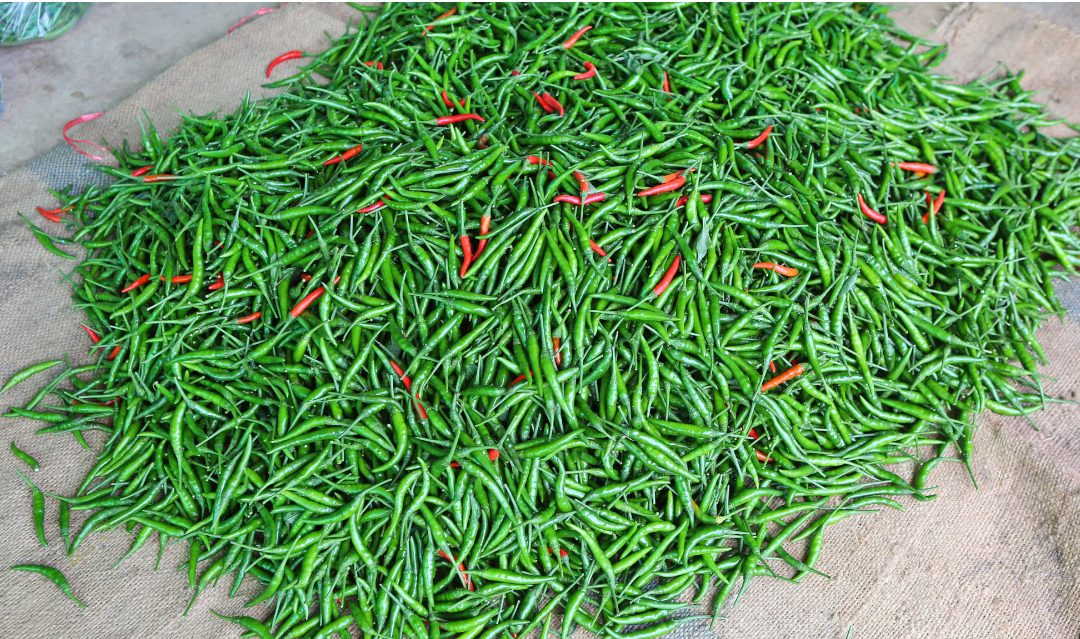 Serrano Peppers from Baja